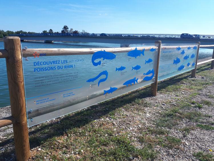 aménagement passe à poissons - Tourisme de découverte économique