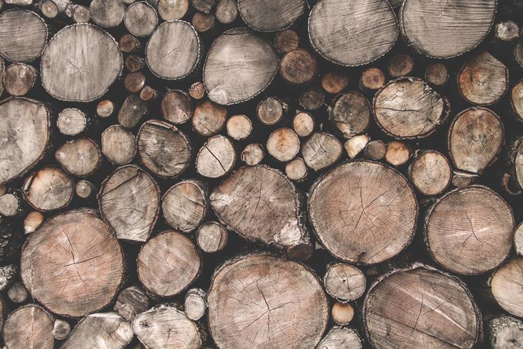 valorisation patrimoine forestier